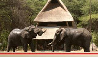 victoria falls hwange safari